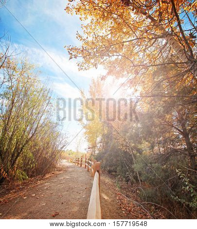 a large orange tree full of leaves ready to fall on a bright autumn day in a local public park with the sun setting behind over a path and a fence