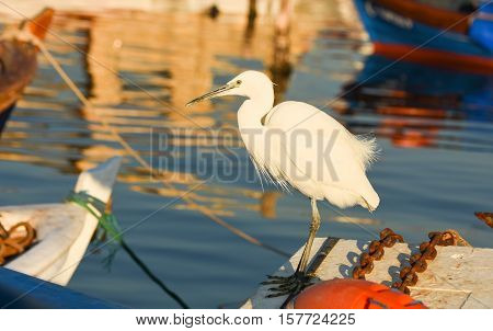 The Great Egret ( Ardea alba ). White heron standing on a boat in marina.