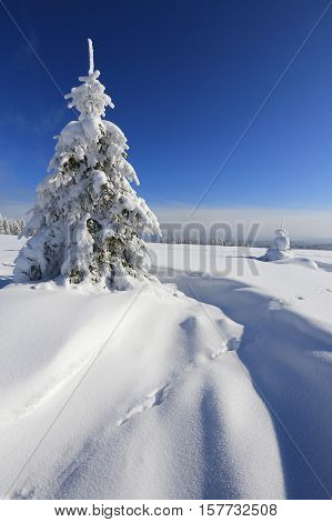Winter landscape and snow wrapped trees in Sumava Czech republic The concept for promotional use instead of the headline. Sport concept. Tourism concept. Winter sports.