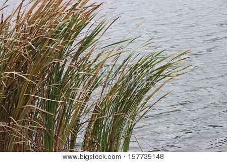 Wind blowing tall grass water waves fall