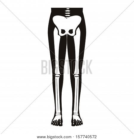 half body silhouette system bone with leg bones vector illustration