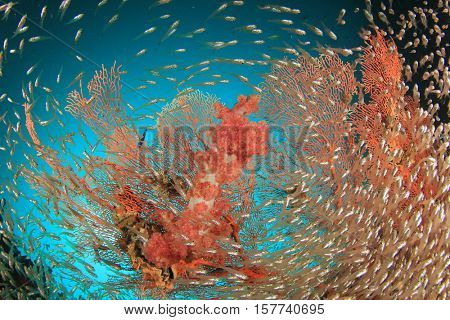 Coral, fish and sea