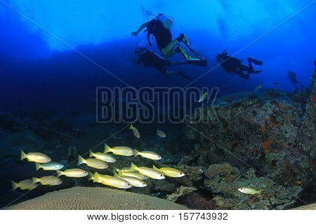 Scuba dive, fish and coral reef in ocean