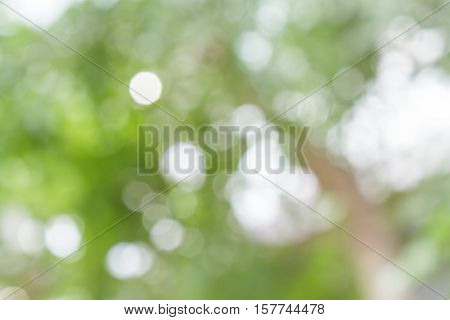 White And Green Nature Bokeh