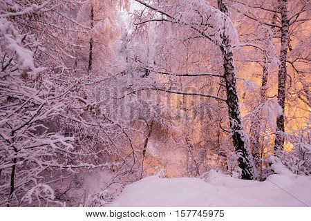 Fabulous night winter forest in the snow. Winter time. Heavy snowfall. Trees in the snow. Beautiful landscape. The trunks and branches of trees. Stairs to the hill. Mountain landscape