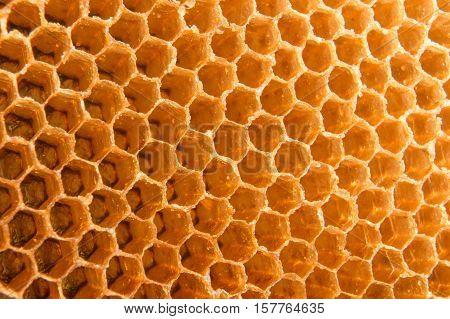 honeycomb bee from nature make  by beeswax