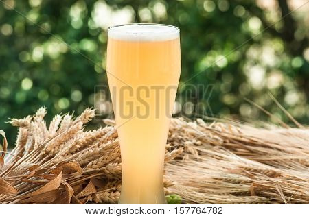 large glass of light unfiltered beer, malt, barley ears standing on an old wooden table dyeing, natural background