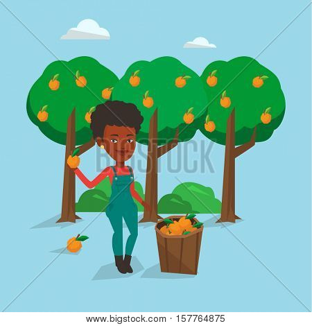 African-american farmer holding an orange on the background of orange trees. Farmer collecting oranges. Gardener standing near basket full with oranges. Vector flat design illustration. Square layout.