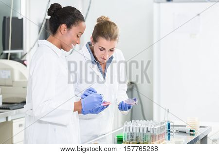 Women in research laboratory talking about tests on germ samples