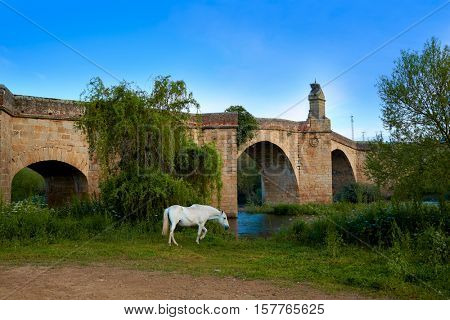 Galisteo bridge and white horse in Caceres of Extremadura Spain by the Via de la Plata way