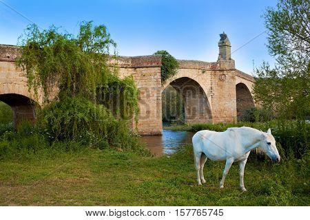 Galisteo bridge and white horse in Caceres of Extremadura Spain by the Via de la Plata way