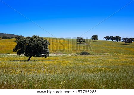 Dehesa grassland by via de la Plata way of Spain in Andalusia