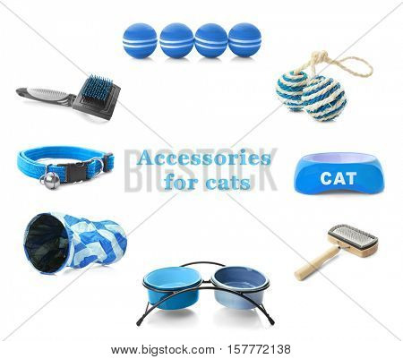 Different cats accessories on white background