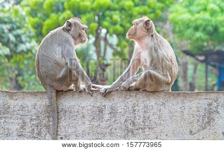 Two monkeys sitting on the wall while catch their eye