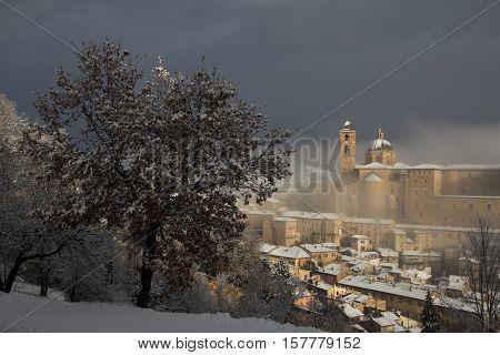 Tree covered by snow near Urbino, Marche - Italy