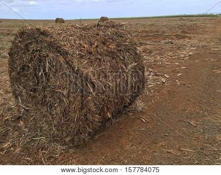 This is a photo about Sugar Cane harvest in Mauritius.
