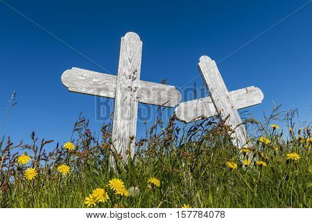 Graveyard with two white crosses in a meadow with flowers on Iceland.
