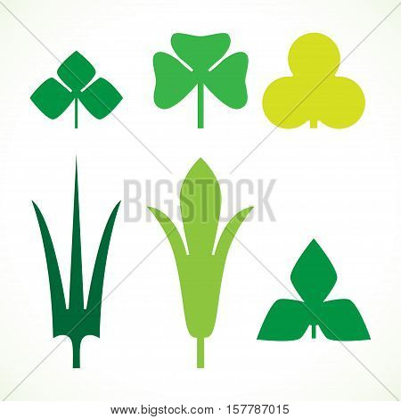 Decorative green leaves pattern set isolated on white vector. Various shapes of green leaves. Elements for eco and bio logo