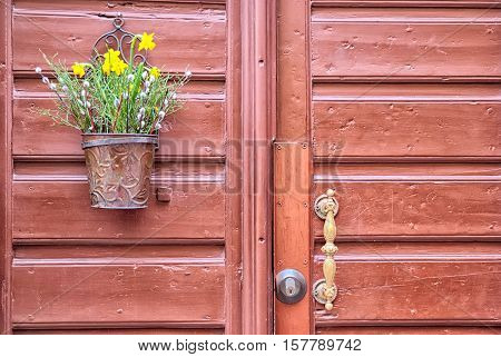 Stockholm. Sweden. Flower pot with yellow narcissus on the wooden door in Gamla Stan (Old Town)