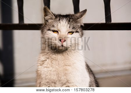 Closeup portrait of the homeless cat with yellow eyes.