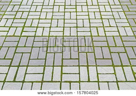 Photo (not a computer rendering) of paving slabs sprouted green moss from excessive moisture
