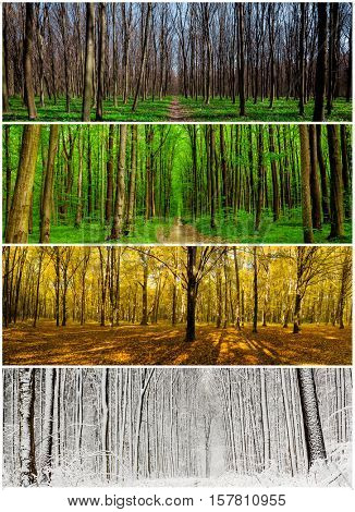 collage panorama forest season backgrounds. Winter, Spring, Summer, Autumn. Collection