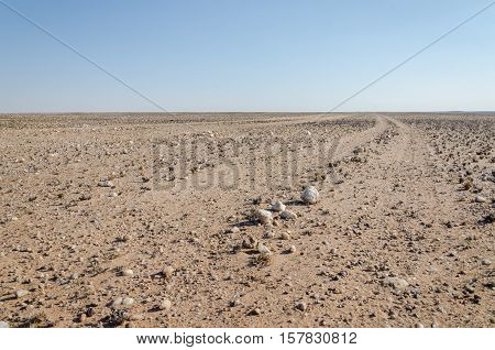 Track running through flat rocky and arid desert scenery in ancient Namib Desert of Angola. The piste is barely visible and rarely driven.