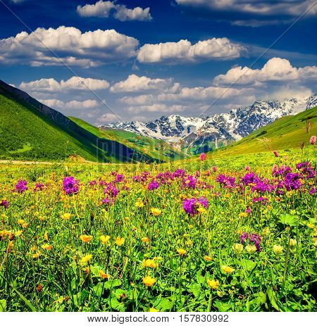 Beautiful View Of Alpine Meadows In The Mountains.