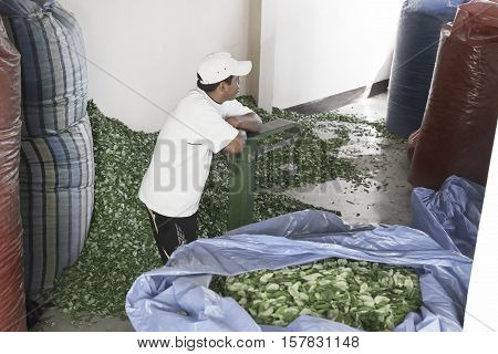 Worker waiting for empty sacks at The Coca Leaves Depot in Chulumani. October 14, 2012 - Sud Yungas, Bolivia