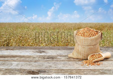 Buckwheat in burlap bag on wooden table with flowering buckwheat field background. Agriculture and harvest concept. Uncooked buckwheat groats on nature background. Buckwheat with buckwheat field background