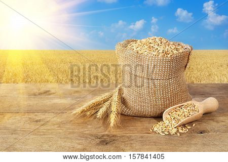 wheat grains in sack. Ears of wheat and wheat grains in bag on wooden table on wheat field with sunshine background. Agriculture and harvest concept. Gold wheat field and blue sky. Harvest with copy space area for a text