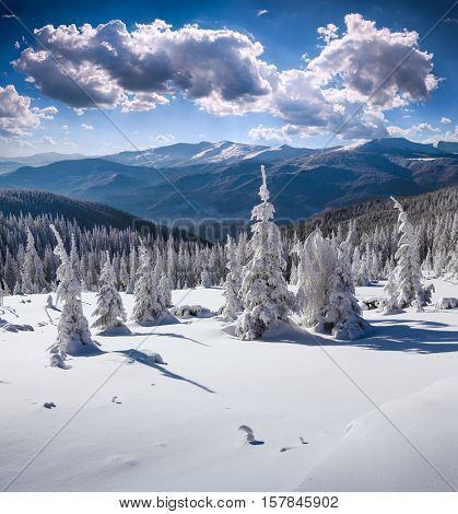 Sunny Winter Landscape In The Carpathian Mountains.