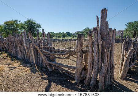 Traditional wooden kraal or enclosure for cattles of Himba tribe people in Namibia and Angola.