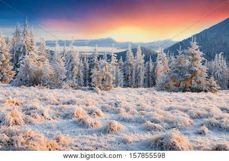 Colorful Winter Morning In The Mountains.