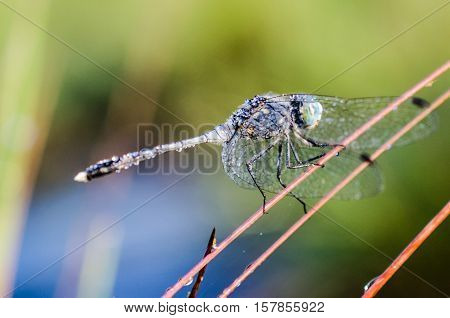 Dragonflies, Insects, Animals, Nature, Macro Dragonfly