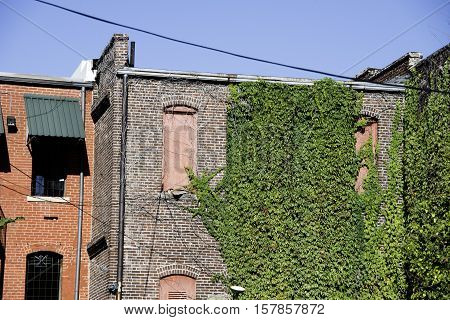 Grunge buildings in Memphis with green ivy wall.