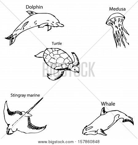 Marine inhabitants with names. Pencil sketch by hand. Vector image