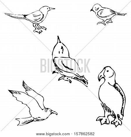 Birds. Pencil sketch by hand. Vector image