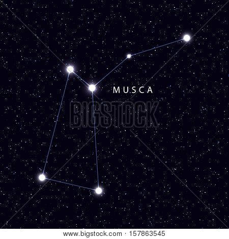Sky Map with the name of the stars and constellations. Astronomical symbol constellation Musca