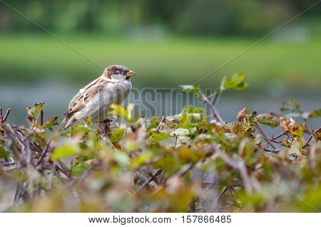 Sparrow in the garden. Funny and beautiful birds around. Birds cute birds in nature. The life of wild animals.
