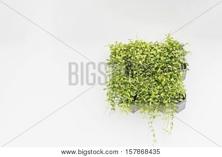 Green Plant In Planter Box Hanging On White Cement Wall