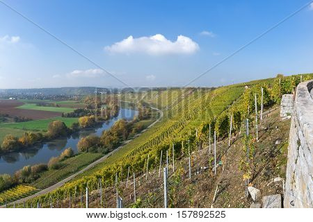 Vineyards at the river Neckar in autumn with a view to Besigheim, Germany