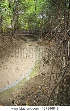 Mud and water in a forest in a national park in the city of Guayaquil, Ecuador.