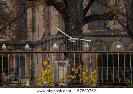 Relaxing Seagulls sitting on a railing. Gulls and Seagulls