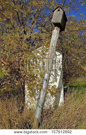 A weathered old leaning birdhouse stands on pole in front of an  abandoned  white outhouse