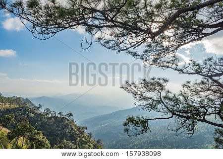 Pine trees and mountain view at Phu Soi Dao Thailand in winter.