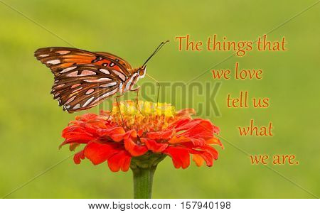 The things that we love tell us what we are - quote with a Gulf Fritillary butterfly on an orange Zinnia flower