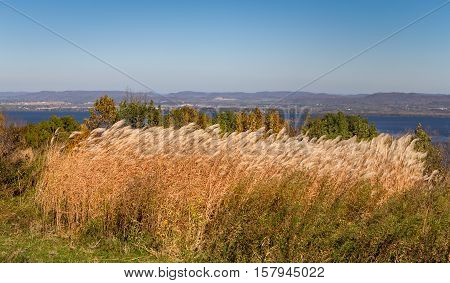 Feather Reed Grass In Autumn