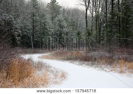 Snowy forest trail on a Wisconsin December day.