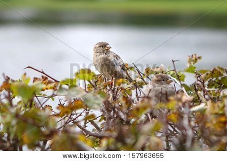 Sparrow in the bushes, funny and beautiful birds around. Birds cute birds in nature. The life of wild animals.